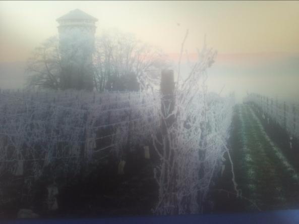Vigne Bardo neige 2017 2